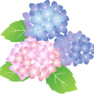 紫陽花の着物は夏
