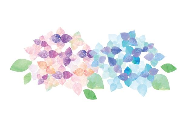 紫陽花の着物は夏に着よう