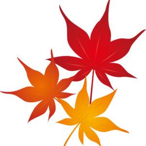 紅葉柄の着物は秋・通年に着よう