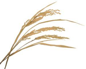 稲(いね)柄の着物は秋に着よう