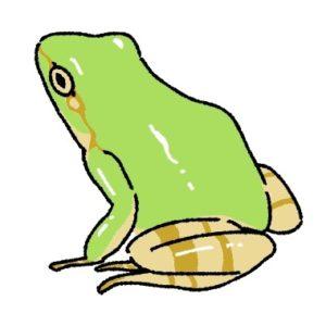 蛙(かえる)の画像