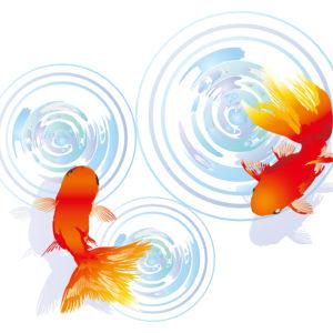 金魚(きんぎょ)柄の着物は夏に着よう