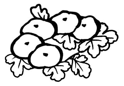 光琳菊の着物の柄の画像