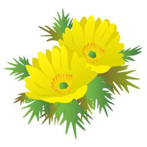 福寿草の着物の柄の画像